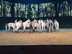 Cavalia Odyyseo: A Blend of Fantasy, Equine Magic & Whimsical Acrobatics